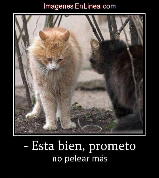 7860_-_esta_bien_prometo