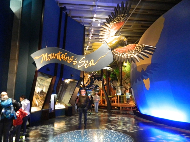 museo02nz