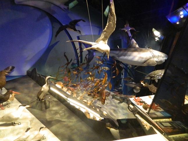 museo03nz