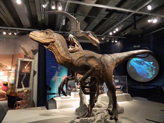 museo06nz