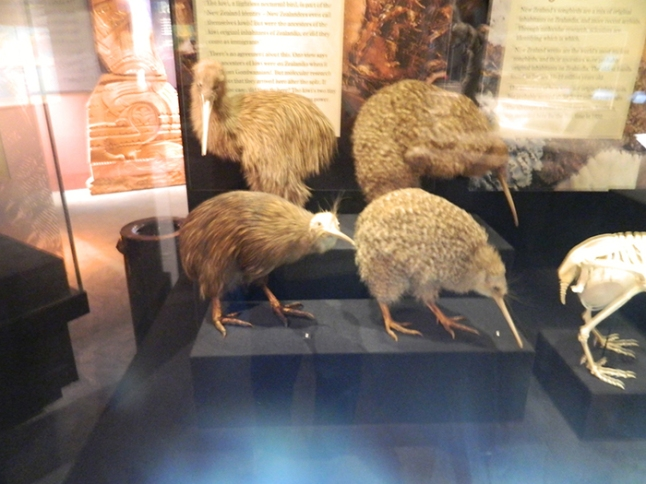 museo07nz